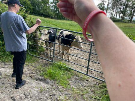 HHT-Cows